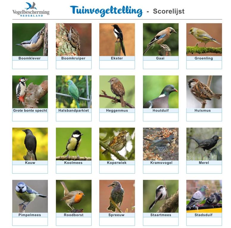 tuinvogeltelling telformuleir